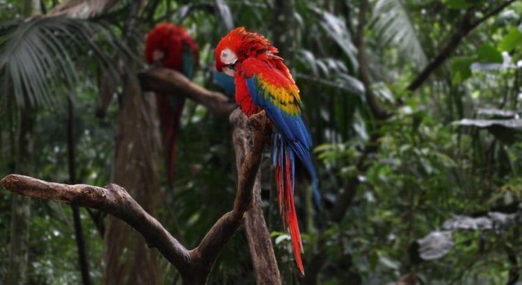 44-parque-das-aves