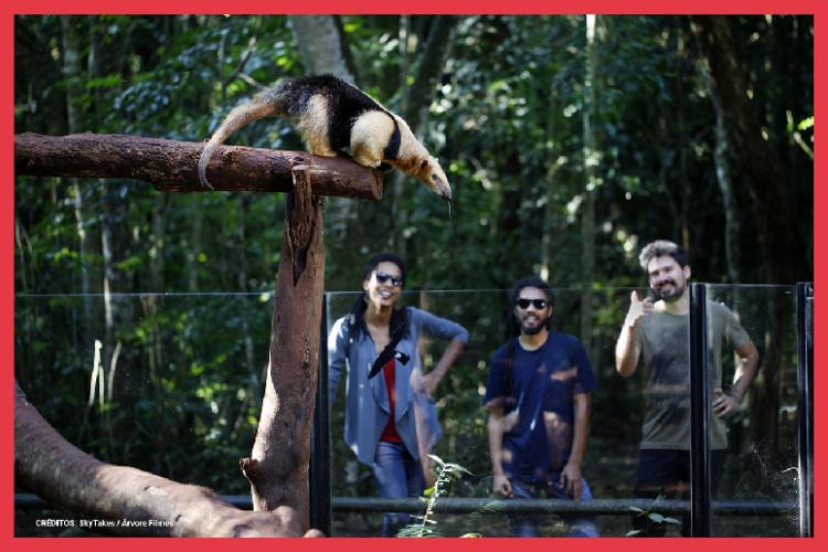 Passeios em Foz do Iguaçu para fazer com crianças tamandua bandeira