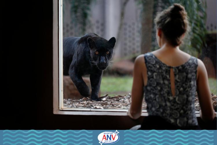 Mulher observando animal por grade de vidro | Itaipu Binacional Muito além do vertedouro