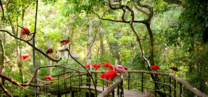 Parque das Aves5